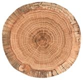 Oak wood texture. Tree slab with growth rings isolated on white background royalty free stock photo