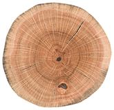 Oak wood texture. Tree stump with growth rings and cracks isolated on white background stock photography