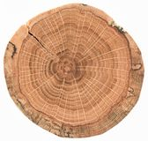 Oak wood texture. Tree stump with growth rings and cracks isolated on white background royalty free stock photos