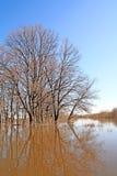 Oak wood in water Royalty Free Stock Photos