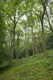 Oak wood, Ullswater, Cumbria