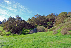 Oak Wooodland biome in Laguna Canyon, Laguna Beach, California. Stock Images