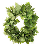 Oak wreath Royalty Free Stock Photos