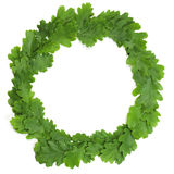 Oak wreath Stock Photos