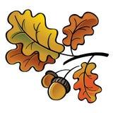 Oaken lämnar och ekollonar Royaltyfri Bild