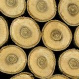 oaken skivar trä Royaltyfria Bilder