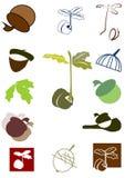 Oakgrodd och ekollon Arkivbilder