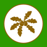 Oakleaves med ekollonar Royaltyfria Bilder