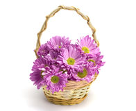 Oaklets in a basket. On the white isolated background Stock Photos