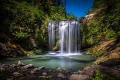 Oakley Creek Waterfall Auckland, Nya Zeeland Arkivbilder