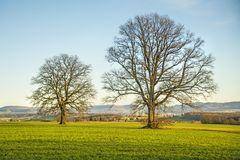 Oaks in autumn with blue sky. In Germany Royalty Free Stock Photography