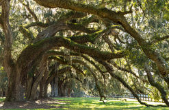 Oaks Avenue Charleston SC Stock Photos