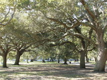 Oaks at the Battery Stock Images