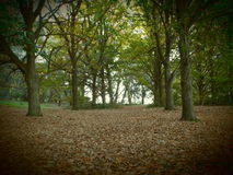 The oaks. Forest of oaks with a carpet of leaves Stock Photos