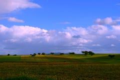 Oaks on green meadow. 12 Stock Image