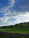 Oaks on green meadow with stones fences and cloudy blue sky background. 2 Stock Photography