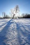 Oaks in hoarfrost Stock Photography