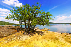 Oaks at lake.   Duero river  in Soria Province Stock Photo