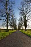 Oaks Lining a Country Lane in Winter Stock Photos