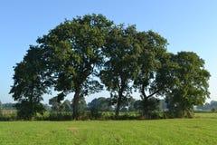 Oaks near an agriculture raod in natue area Reestdal Stock Photos