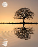 oaksolnedgångtree royaltyfri fotografi