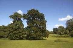 oakssommar royaltyfri bild