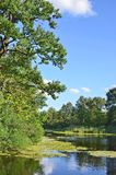 Oaktree över laken royaltyfri foto