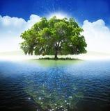 oaktree Royaltyfri Fotografi