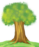 oaktree Royaltyfria Bilder