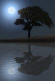 Oaktree bij nacht Stock Afbeelding