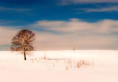 Oaktree i vinter Royaltyfria Bilder
