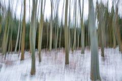Oaktrees i vinter Royaltyfri Fotografi