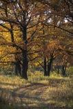 Oakwood Royaltyfri Bild