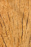 Oakwood background. Sawn oak with radial splits Stock Images