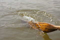 Oar in water from boat marine holiday background Royalty Free Stock Photos