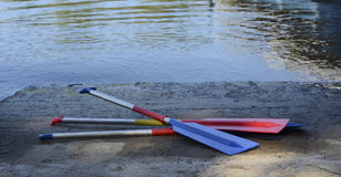 Oars for a boat Stock Image