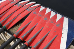 Oars At Crew Race Stock Image