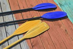 Oars and Paddles Stock Image