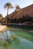 oas Arkivbilder
