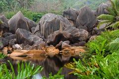 oas royaltyfria foton