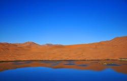 Oas i öken Arkivfoton