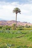Oas i öknen i Marocko Arkivfoto