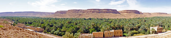 Oas i dadedalen i Marocko Afrika Arkivbild