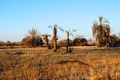 Oas i den Oman öknen Royaltyfria Bilder