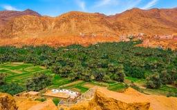 Oas i Marocko, nära klyftor av Todra royaltyfri fotografi