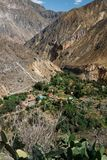 Oas Sangalle i den Colca kanjonen, Peru arkivfoto