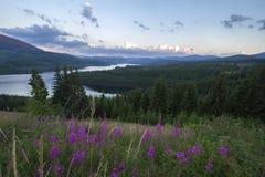Oasa Lake arkivbilder