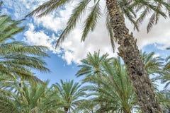 Oase Al Haway Oman stock afbeelding