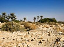 Oase auf der Wüste stockfoto