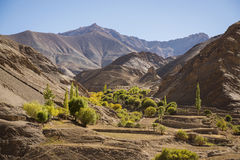 Oase bij Maanland en Blauwe Hemel Lamayuru Ladakh, India - September 2014 stock foto's